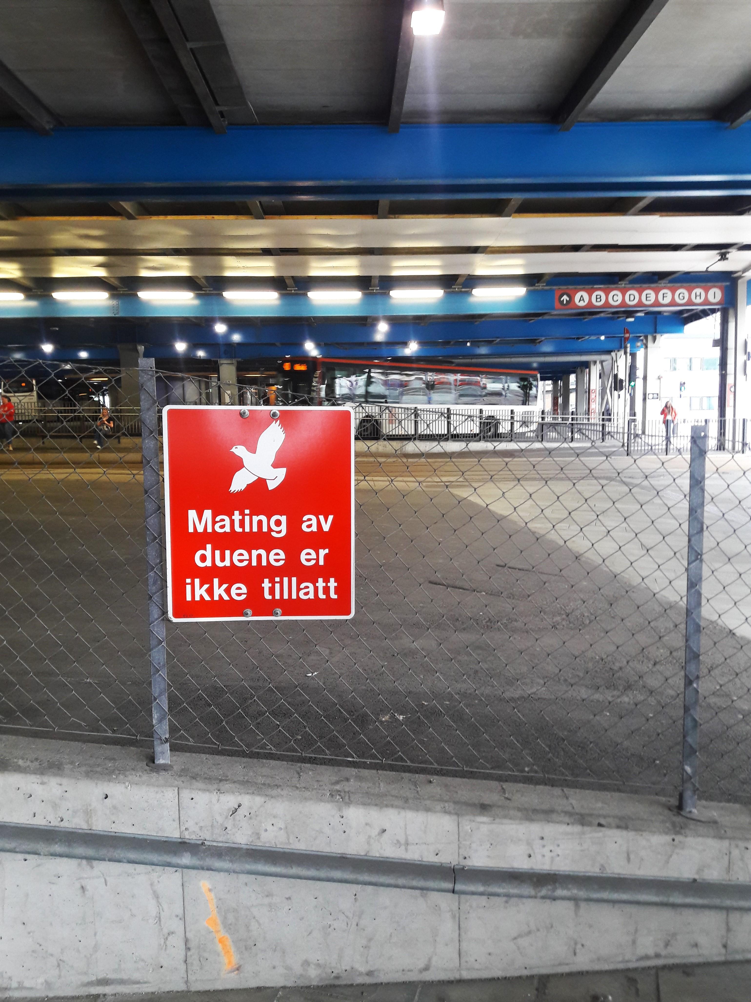 Pigeons-Norway.jpg